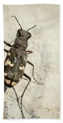 Tiger Beetle Looking For Prey On A Stone Beach Towel