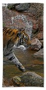 Tiger Crossing Poster Beach Towel