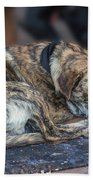 Tiger Dog And The Buskers Beach Towel