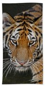 Tiger Hunting Beach Towel