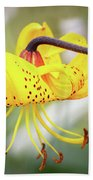 Tiger Lily. Beach Sheet