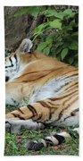 Tiger- Lincoln Park Zoo Beach Towel