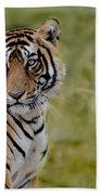 Tiger Look Beach Towel
