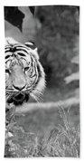 Tiger Love Beach Towel