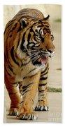 Tiger Pacing Beach Towel