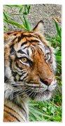 Tiger Portrait Beach Towel by Jennie Marie Schell