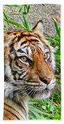Tiger Portrait Beach Towel