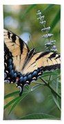 Tiger Swallowtail 1 Beach Sheet