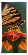 Tiger Swallowtail - 3 Beach Towel