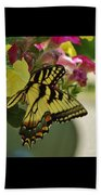 Tiger Swallowtail Butterfly On Begonia Bloom         June            Indiana Beach Towel