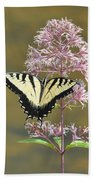 Tiger Swallowtail Butterfly On Common Milkweed 1 Beach Towel