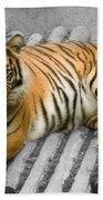 Tigers Look Beach Towel