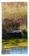 Tigress By The Stream Beach Towel