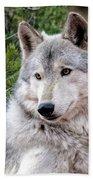 Timber Wolf Beach Sheet