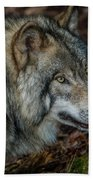 Timber Wolf Picture - Tw417 Beach Towel
