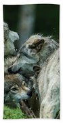 Timber Wolf Picture - Tw70 Beach Towel