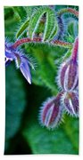 Tiny Blue Flower On A Bush At Pilgrim Place In Claremont-california  Beach Towel