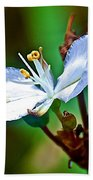 Tiny White Wildflower In Vicente Perez Rosales National Park Near Puerto Montt-chile  Beach Towel