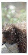 Tired Porcupine On A Fallen Log Beach Towel