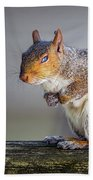 Tired Squirrel And Fly Beach Towel