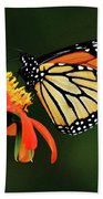Tithonia Loving Monarch Beach Towel