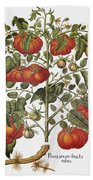 Tomato, 1613 Beach Towel