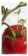 Tomato Seedlings Sprouting Beach Towel