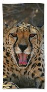 Tongue And Cheek Cheetah Beach Sheet