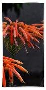 Top Of Aloe Vera Beach Towel