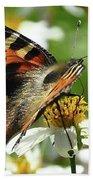 Tortoise Butterfly Beach Towel