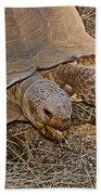 Tortoise Eating Lunch In Living Desert Zoo And Gardens In Palm Desert-california  Beach Towel