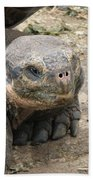 Tortoise Beach Towel
