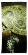 Turtle With A Tale To Tell Beach Towel