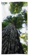 Towering California Redwood Trees Beach Towel