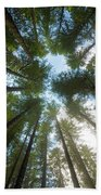 Towering Fir Trees In Oregon Forest State Park Beach Towel