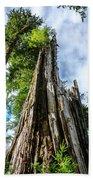 Towering Trees Beach Towel