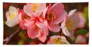 Toyo-nishiki Quince Blooms Beach Towel