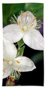 Tradescantia Flower Beach Towel