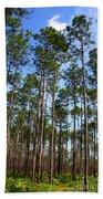 Trail Through The Pine Forest Beach Towel