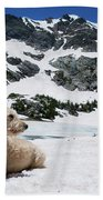 Traildog In Snow At Missouri Lakes Beach Towel