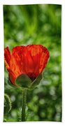Translucent Poppy Beach Towel