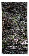 Treaty Oak 12 14 2015 038 Beach Towel