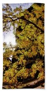 Tree Along Zion Riverside Walk Beach Towel