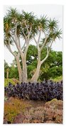 Tree And Succulents In Huntington Desert Gardens In San Marino-california Beach Towel