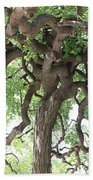 Tree At Ming Tombs Beach Towel