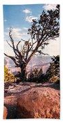 Tree At Moran Point Beach Towel