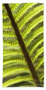Tree Fern Frond Beach Towel
