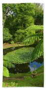 Tree Ferns Beach Towel by Gaspar Avila