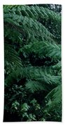 Tree Ferns Beach Towel