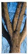Tree Fork Beach Towel